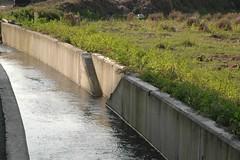 國道6號埔里愛蘭交流道下設計不良的蛙類逃生坡道(特生中心林德恩提供)