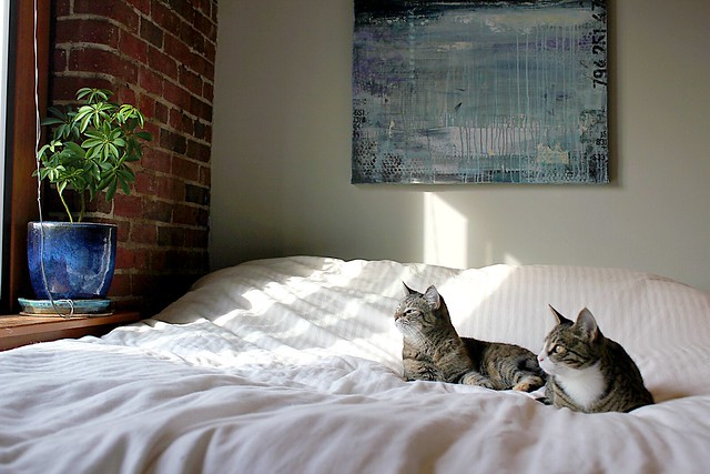 kitties, plants, bricks, art