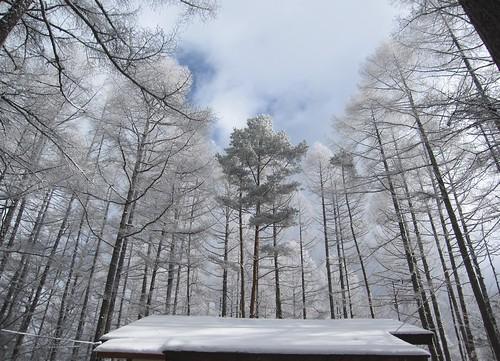 ★雪をかぶった木々  by Poran111