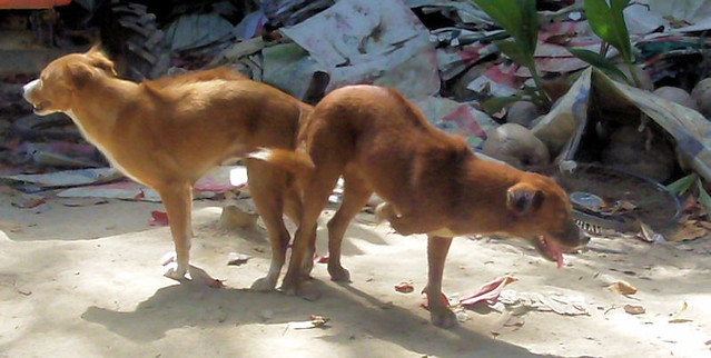 Copulating Dogs  Flickr - Photo Sharing-1507