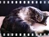 catman-hangover
