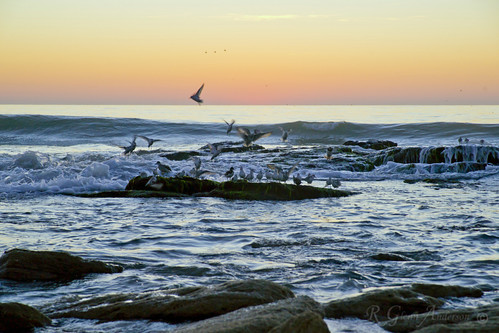 sea bird sunrise twilight rocks waves fortfisher a850 ma24105