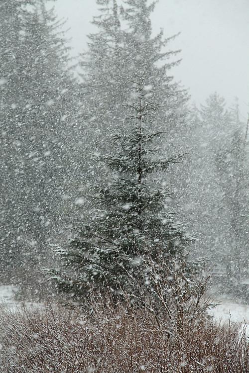 snowing in Kasaan, Alaska