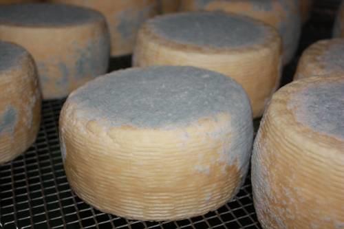 A sant 39 alberto ravenna il formaggio del caseificio for Alberto pastore