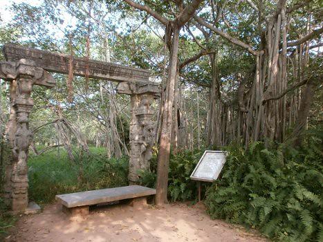 Adyar-banyan-tree-1
