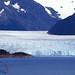 Glaciar Perito Moreno, Calafate, Patagonia Argentina 001