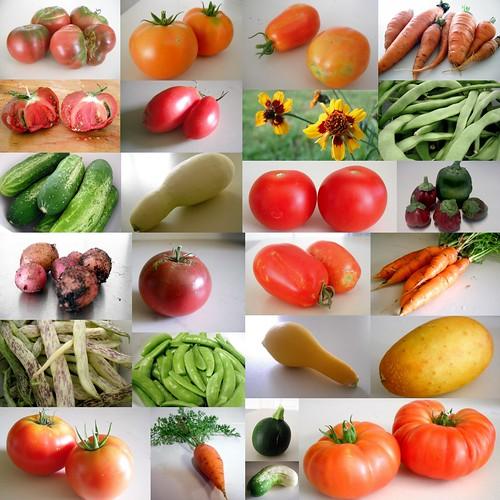 2011 Harvest by jenniferworthen