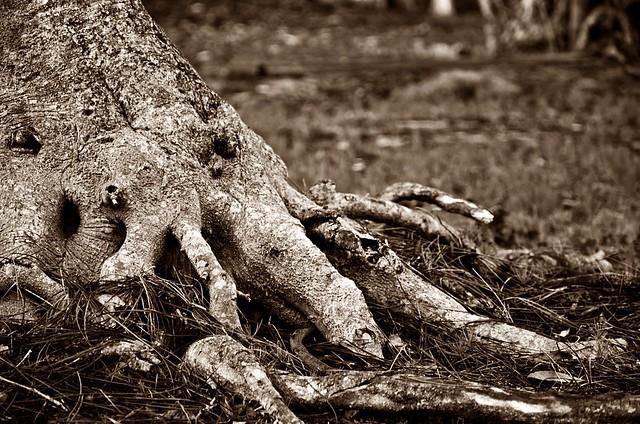 tus raíces y las mías