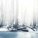 Cold forest