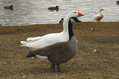 Goosey BFFs