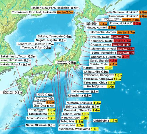 Tohoku observed tsunami heights