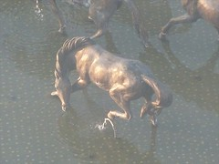 Live Like Horses.