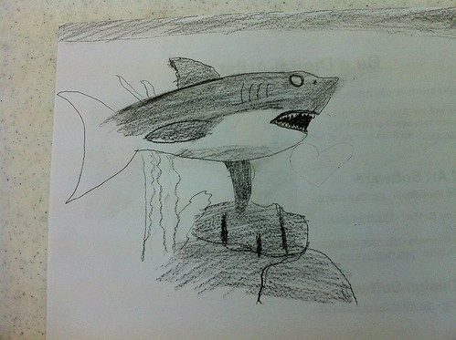 A student's Great White Shark