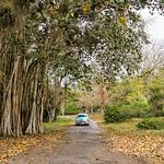 Image of Jardín botánico de Cienfuegos near Cienfuegos. green car