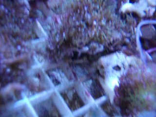 005 Nano Coral Pack - Soft