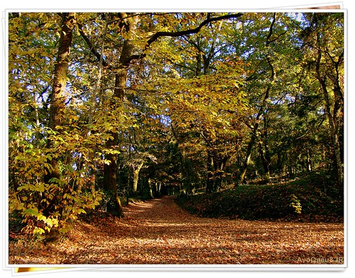No Parque Florestal do Fontelo * Viseu * Portugal