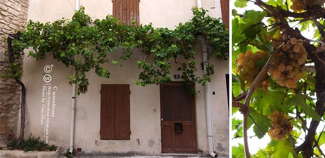 Bonjour St-Remy~ 聖羅米 普羅旺斯。法國人的性情!   R1041991