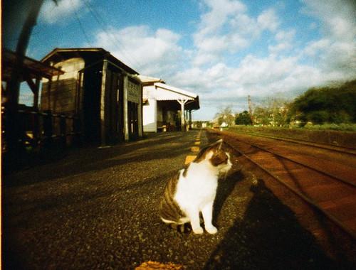 駅長猫さん