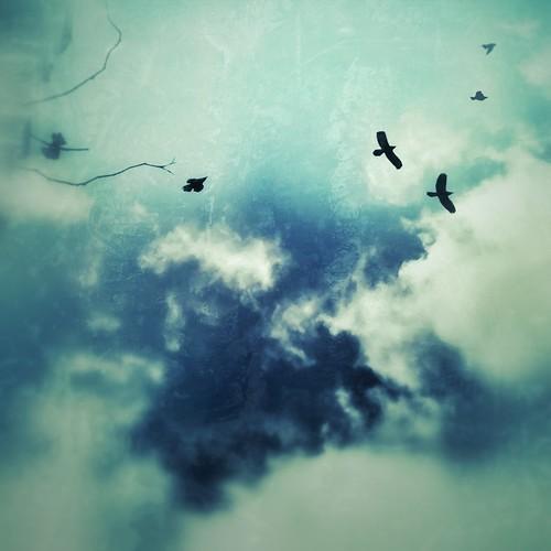 173/365- Free by elineart