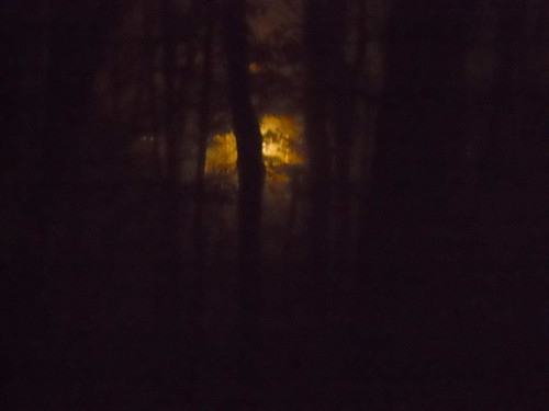 a light in the woods, 2 am