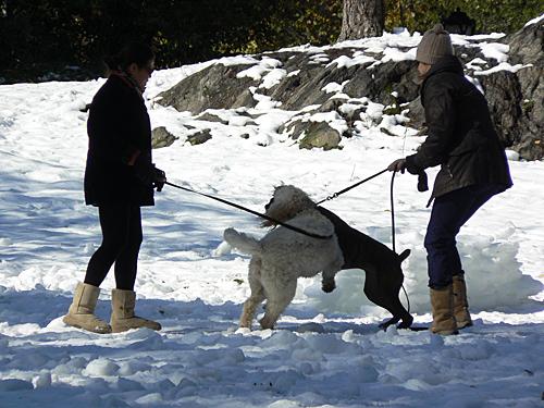 chiens dnas la neige.jpg