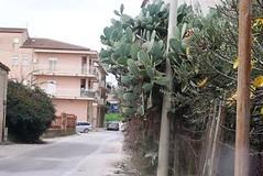 Strettoia  V. Pagano  - 14.12.11 002