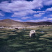 Small photo of Altiplano