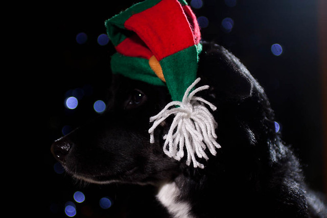 holiday dogs-5