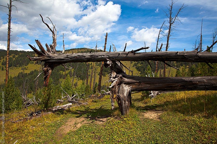 Сгоревший лес на горе Байда