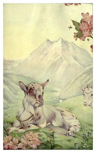 049-Primavera-News of spring and other nature studies 1917- Ilustrado por Edward J. Detmold