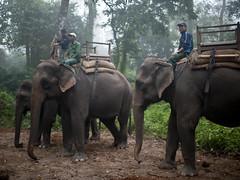 adventure(0.0), african elephant(0.0), animal(1.0), indian elephant(1.0), elephant(1.0), elephants and mammoths(1.0), fauna(1.0), mahout(1.0), safari(1.0), wildlife(1.0),
