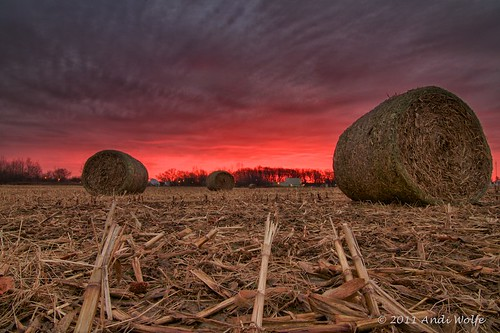 Cornfield sunrise by andiwolfe