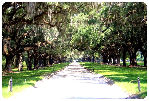 Avenue of the oaks boone hall plantation