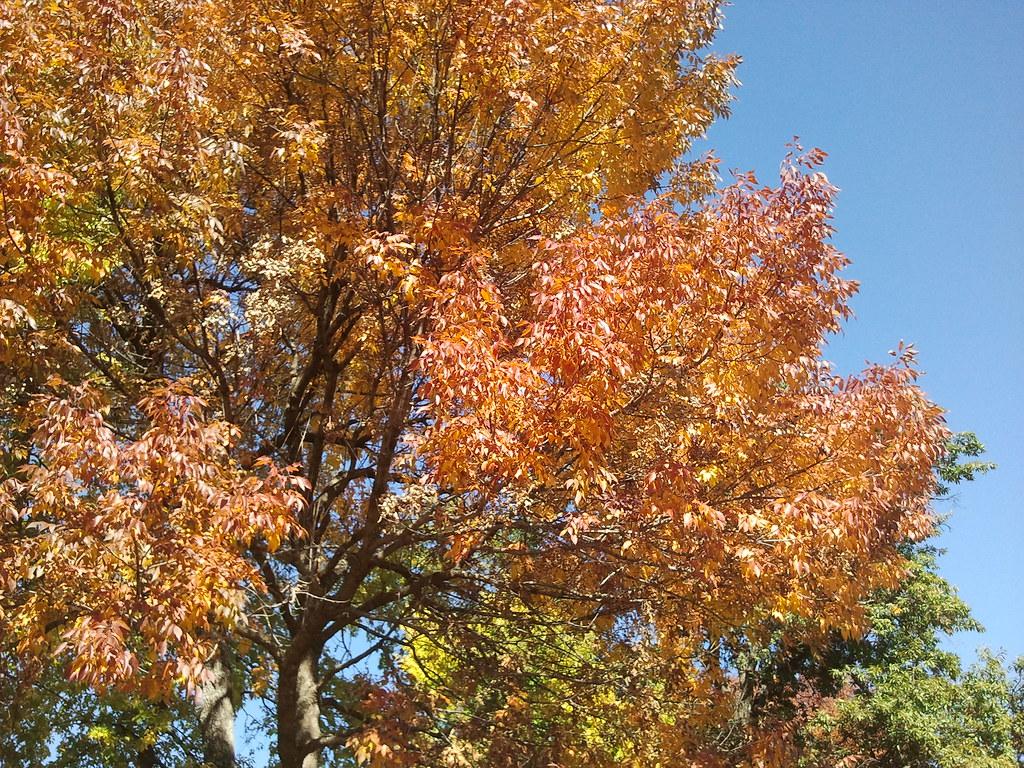 Epitaph to a Tree? | Powell Gardens, Kansas City\'s botanical garden