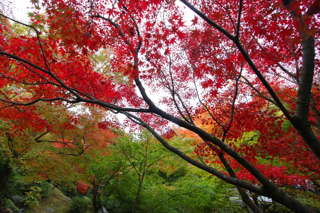 Kyoto Rakunan Guide (11)