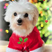 Most Adorable Dogs2