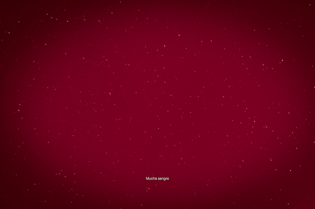 289/365: Mucha sangre