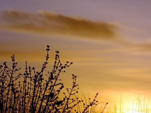 sunrise sunsetsunrise wilberfoss 1facebook 1flickr 1keithlaverack 1wilberfoss