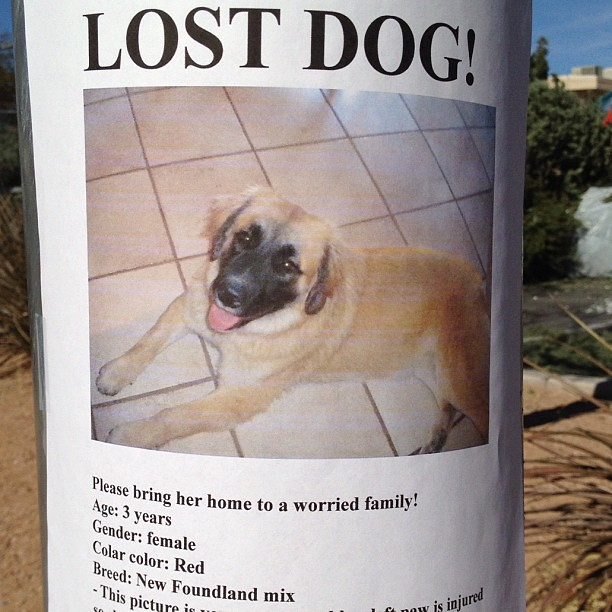 how to make a lost dog sign