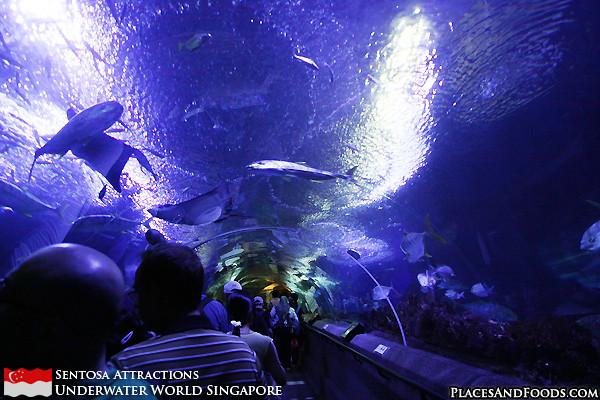 sentosa-underwater-world-6