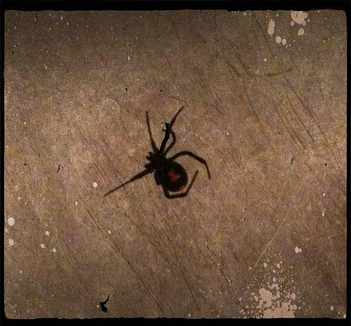 Black Widow in repose