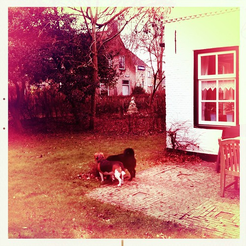 HIP_347552286.313738 by Beate Knappe