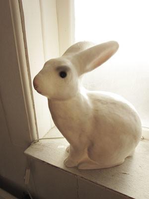kaniner05