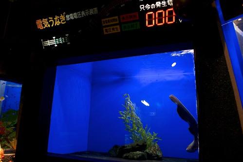 寺泊水族博物館2011冬