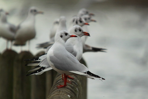 Gull perch