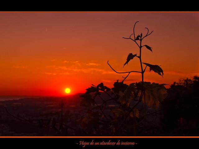 Hojas de un atardecer de invierno / Leaves of a winter evening