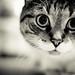 Big eyes by irina silva