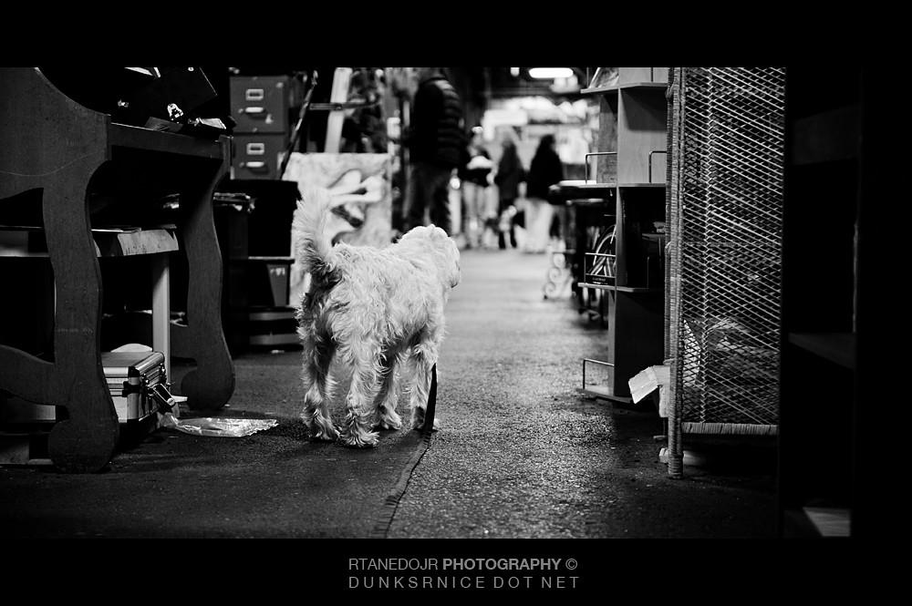 Dog B&W.