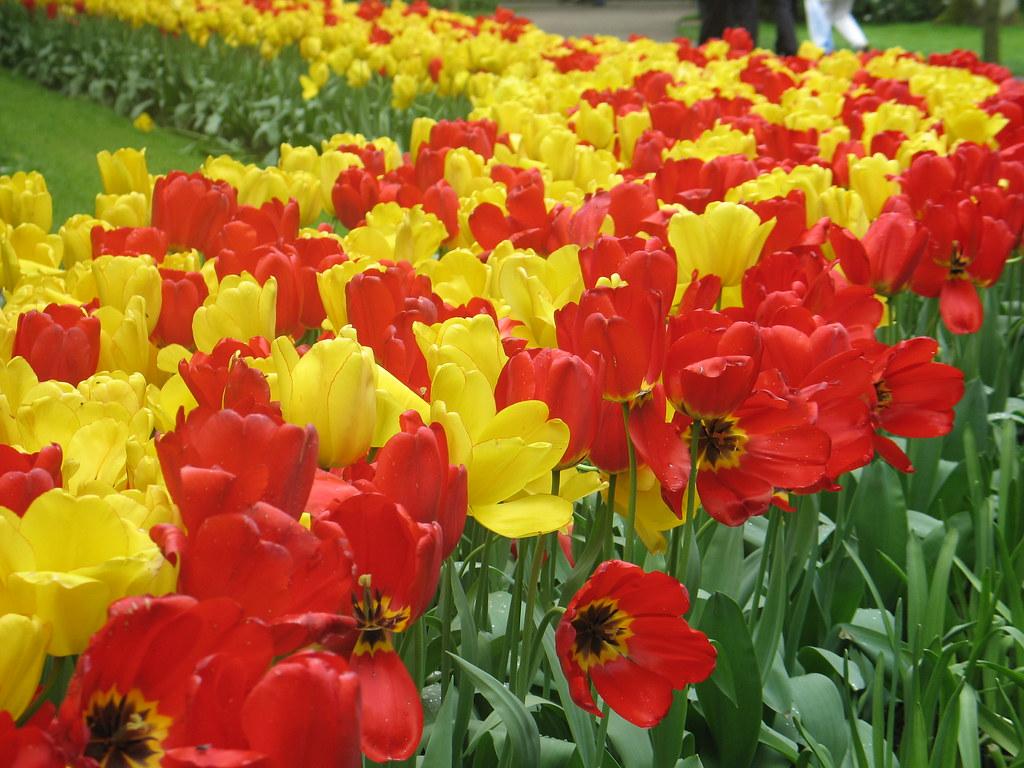 essay on flower garden