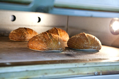 Baking boules of sourdough bread in the oven